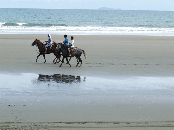 Horse riding in Las Lajas Beach