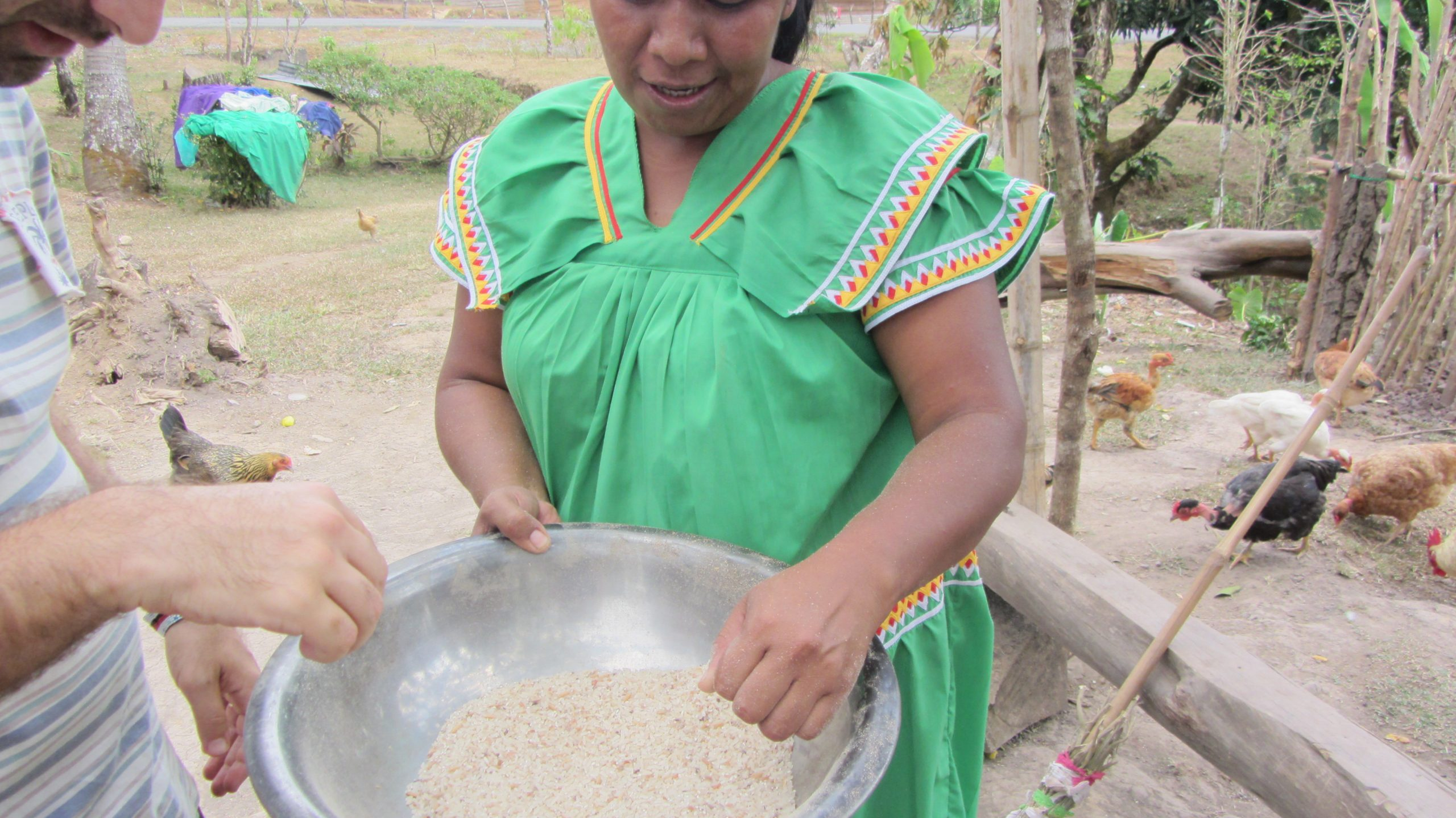 Ngöbe woman processing rice